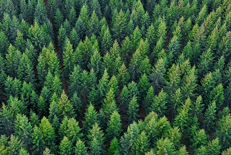 Bild von mehreren Bäumen