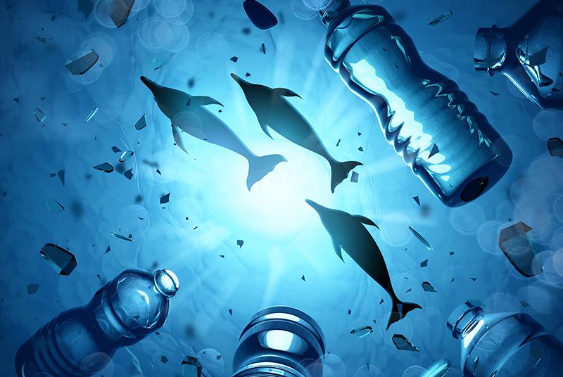 Ein Bild zeigt, wie Delfine neben gebrauchten Plastikflaschen schwimmen.