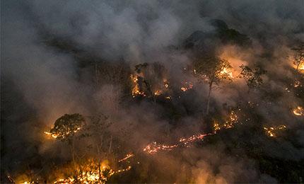 Foto - Rettung des Amazonas