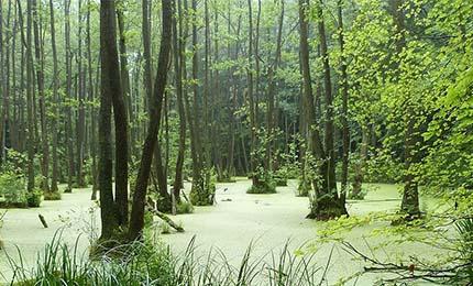 Foto - Wälder der Uckermark