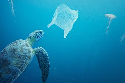 Umweltschutz im Alltag: effektiv und umweltschonend ausmisten
